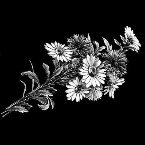 Цветок 14 - Гравировка цветка на памятнике, производство и доставка по РФ
